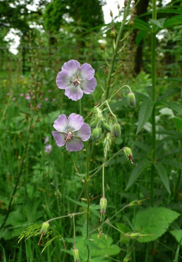 plantas-para-cultivar-bajo-los-arboles-04