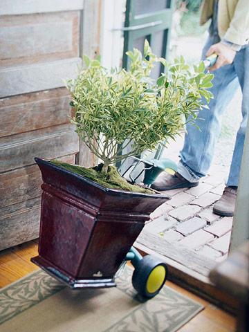 Llevar las plantas del exterior al interior