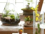 imagen 12 plantas para armar terrarios