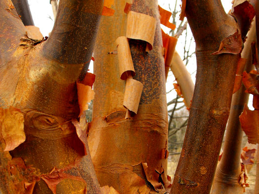Ramas y troncos a color 1