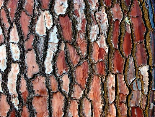 Ramas y troncos a color 3