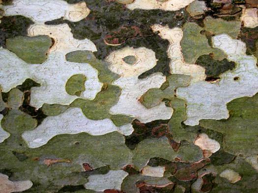 Ramas y troncos a color 5