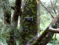 imagen La belleza y colorido de troncos y ramas en invierno
