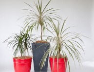 imagen Aprende a reproducir plantas variegadas