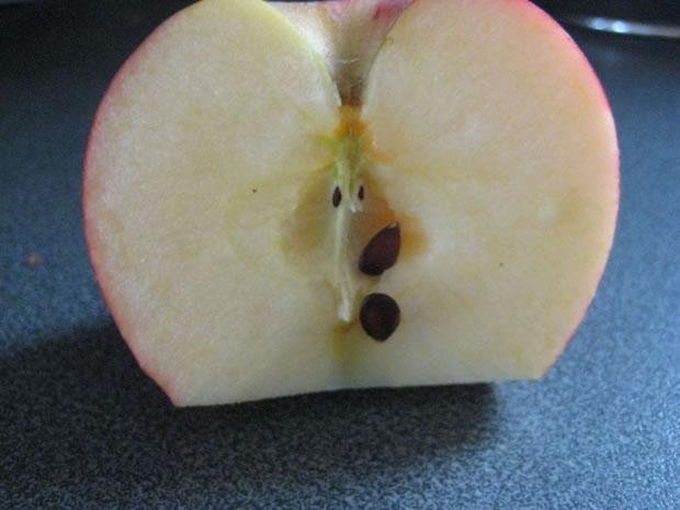 Cultivar manzano 2