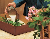 imagen Cómo secar flores con arena