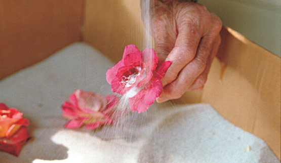Secar flores con arena 5
