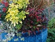 imagen Composición para una maceta invernal y colorida