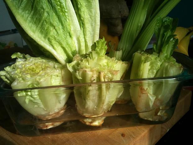 Cultivar lechuga romana 4