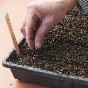 preparar suelo para semilleros