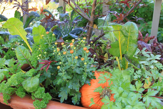 Combinar flores y hortalizas