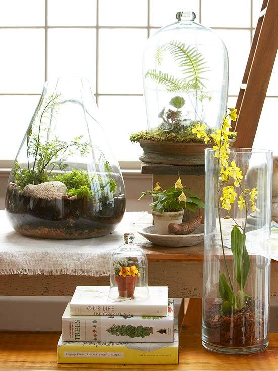Plantas para terrarios
