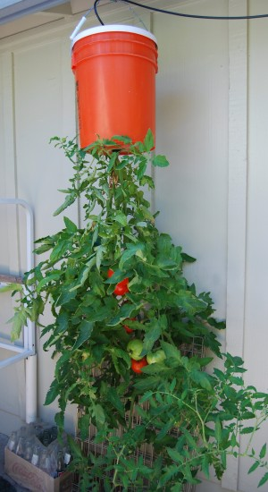 Hortalizas para cultivar de forma invertida