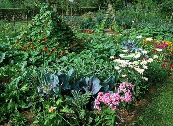 Consejos para huerto ecológico