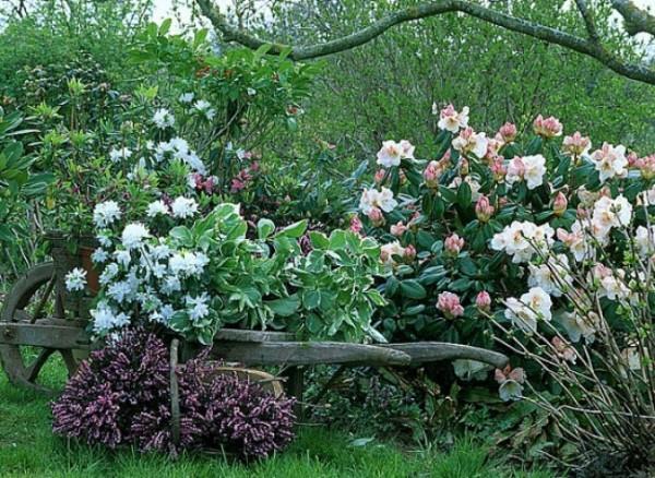 Arbustos y plantas perennes