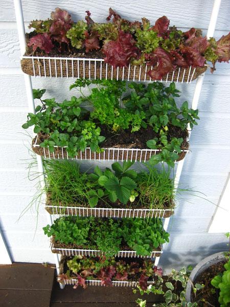 Jardín vertical con elementos reciclados