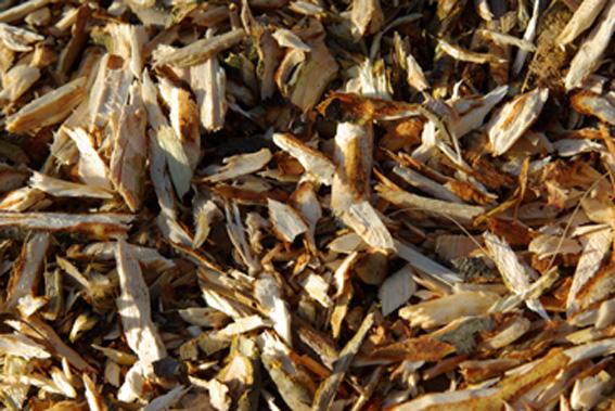 Compost madera triturada