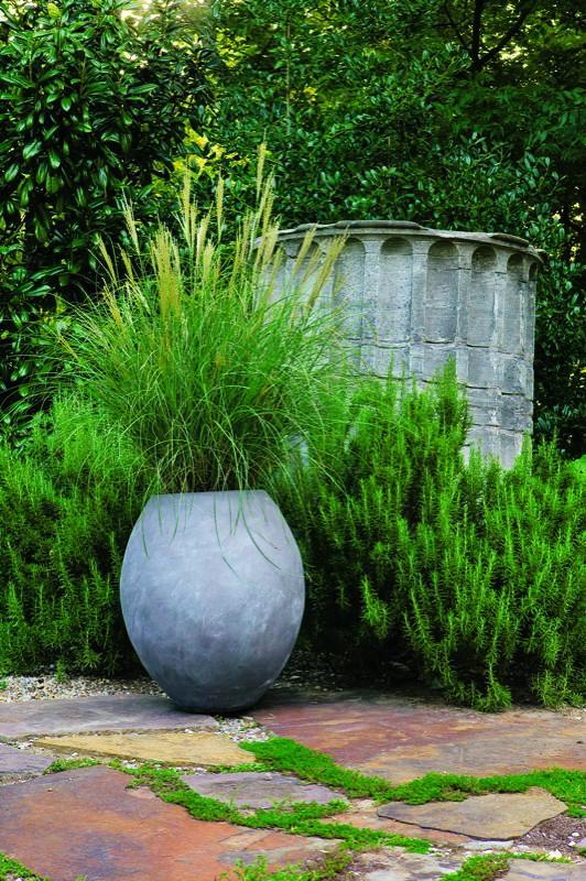Hierbas ornamentales en maceta
