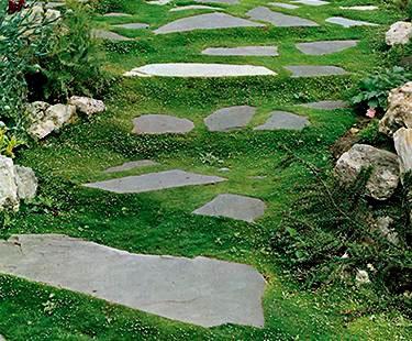 Plantas ideales para caminos y senderos 7