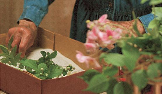 Secar flores con arena