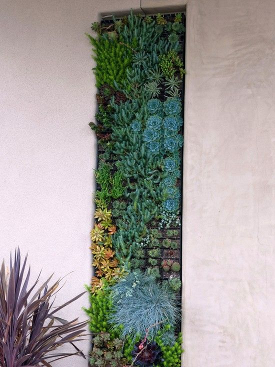 Consejos para un peque o jard n for Jardin vertical pequeno