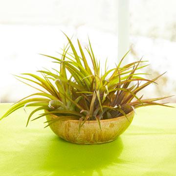 Tips para cultivar plantas aéreas 1