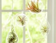 imagen Tips para cultivar plantas aéreas