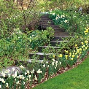 Escaleras en el jard n for Jardines en desnivel