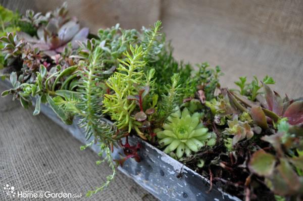 Jardineras de estilo vintage 2