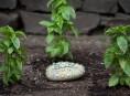 imagen Identificador de cultivo con piedras