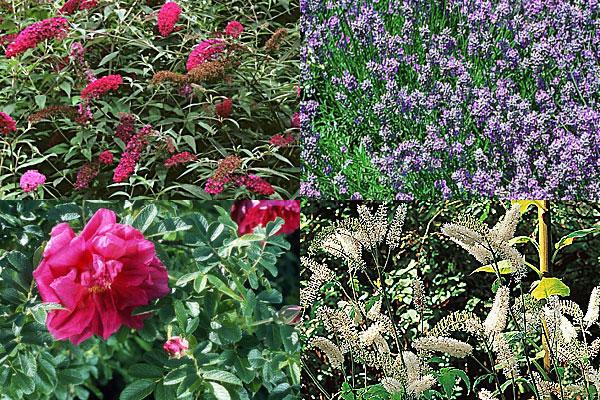 Tener un jardín perfumado 4