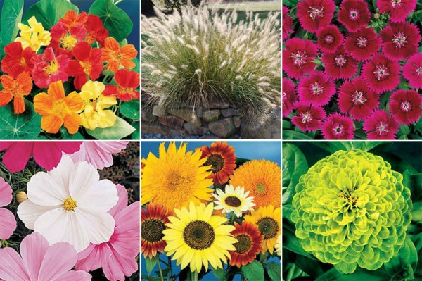 las mejores plantas anuales para cultivar a partir de semillas