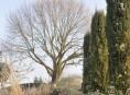 imagen Los árboles caducifolios y el invierno