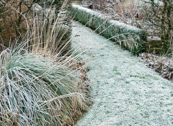 Qué hacer si se hiela el jardín 1