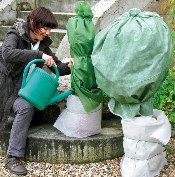 Qué hacer si se hiela el jardín 3