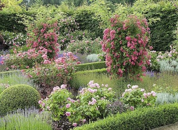 Tener un jardín perfumado 1
