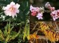 imagen Cómo tener un jardín perfumado todo el año