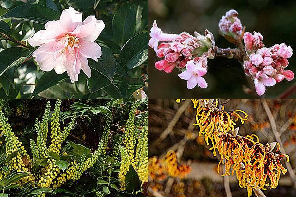 Tener un jardín perfumado 2