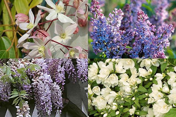 Tener un jardín perfumado 3