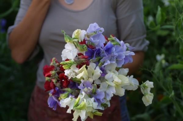 Tips para cultivo de flores de corte 1
