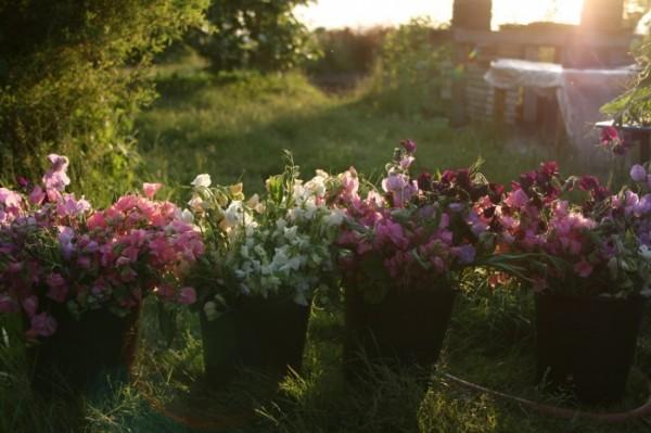 Tips para cultivo de flores de corte 5
