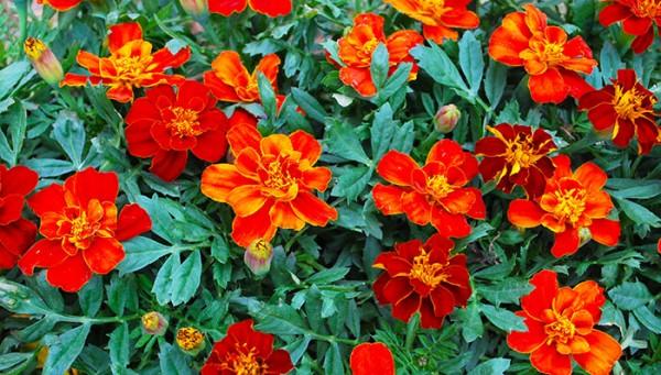 Flores de primavera 1