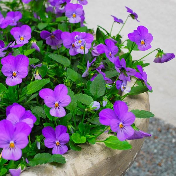 Flores de primavera 2