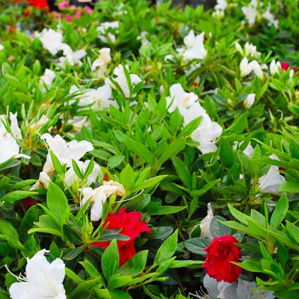 Flores de primavera 3