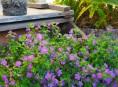 imagen Algunas de las mejores flores de primavera