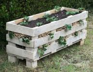imagen Aprovecha un palet para cultivar fresas