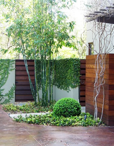 7 Design Basics To French Garden Style additionally Zoysia Tenuifolia additionally Hosta Description besides Garden Salon By Kazutoyo Yamamoto Dezeen likewise Japanese Maple Green Weeping Viridis 24 Pot. on plants for japanese garden design