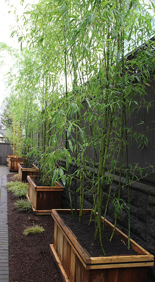 Bamb para modernizar tu jard n - Jardin de bambu talavera ...