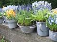 imagen Cómo forzar el crecimiento de los bulbos de primavera