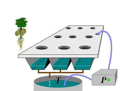 Cultivo hidropónico 4